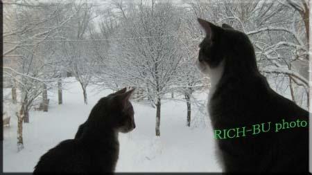 ぉぃぉぃ雪やで・・・。.jpg
