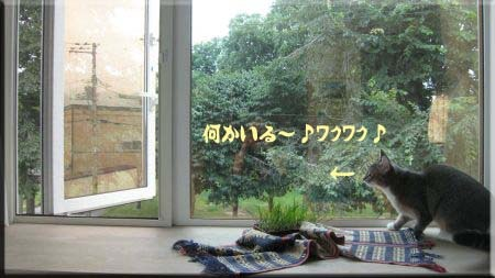チョウチョとの格闘・・・出会い。.jpg