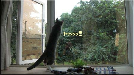 チョウチョとの格闘・・・ファイナル。.jpg